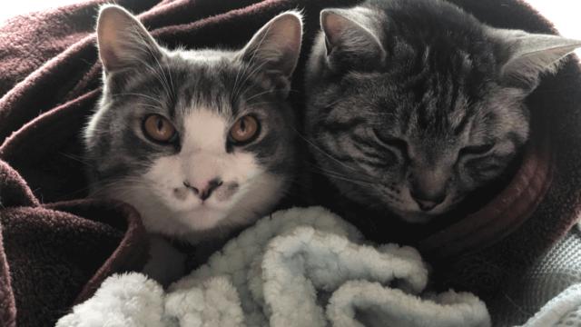 5歳と生後4か月の猫2匹